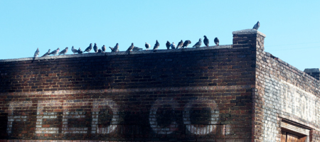 Pigeons at Feed Co