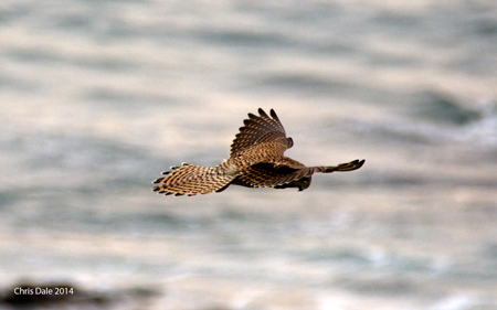 Hoverbird